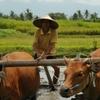 Bali Ordinary Living