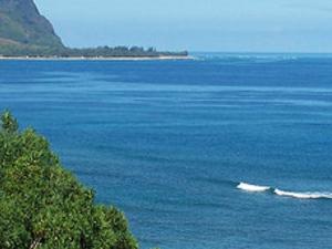 Best of Kauai Combo Tour (Kauai by Land, Water & Air) Photos