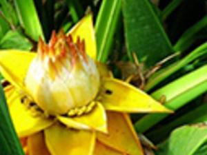 Botanical Park Photos