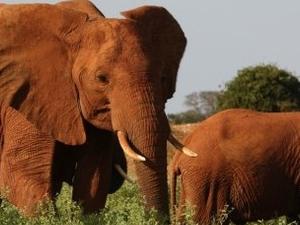 Bucket-list Kenya Safari Photos