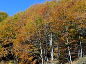 Bulgaria Fall Foliage Tour Photos
