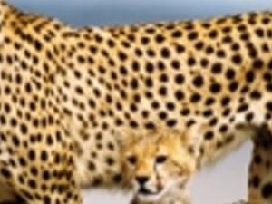 Camping safari ,Kenya,Samburu,Baringo,Bogoria,lake Nakuru Photos