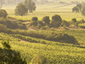 Casablanca Valley and Wine Tour, Tour in Private Photos