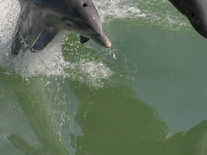 Coastal Sealife, Dolphin, and Shelling cruise Photos