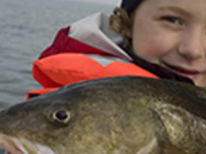 Cod and Flounder Fishing at Oresund Photos