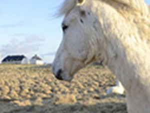 Combo: Whale Watching and Horses Tours Photos