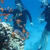 Daily Diving in Read Sea (Hurghada, Sasfaga)