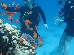 Daily Diving in Read Sea (Hurghada, Sasfaga) Photos