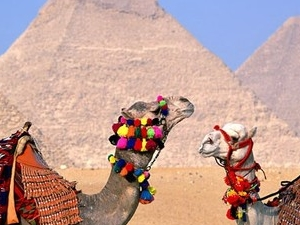 Day Trip to Cairo from Sharm El Sheikh by Road Photos