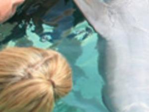 Dolphin Encounter Photos