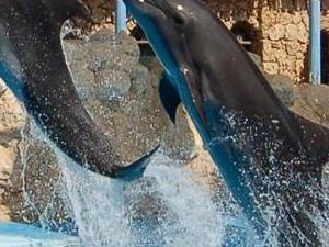 Dolphin Show Photos