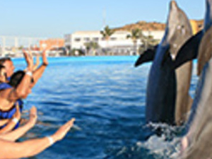 Dolphins Swim in Cabo San Lucas Photos