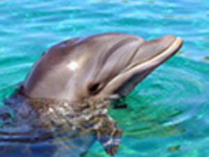 Dolphin Swim Adventure. At Aquaventuras Park. Photos