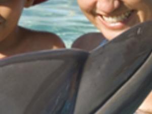 Dolphin Swim Experience Photos