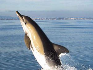 Dolphin Watching and Caves Tour Photos