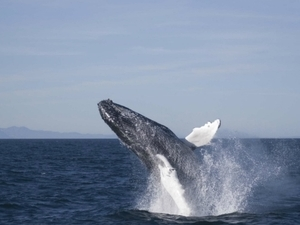 Elding Whale Watching Photos