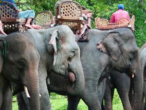 Elephant Camp Experience Laos Photos