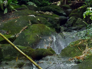 El Yunque Rainforest Hiking from San Juan Photos