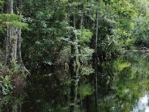Everglades City & Ten Thousand Islands Everglades Florida Photos