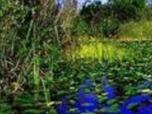 Everglades Tour Multilingual Photos