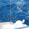 Fishing Tour in Hurghada by boat