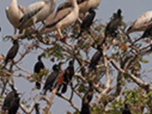 Full Day Bird Sanctuary Photos