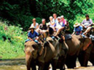 Full Day Mae Taman Rafting And Elephant Riding From Hotel Inside Chiang Mai City Only Photos
