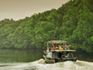 Full Day Orang-Utan And Mangrove Forest Photos