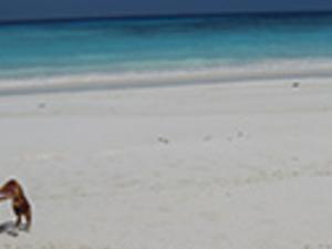 Full Day Tachai Island Photos