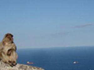 Gibraltar Sightseeing (full day) Photos