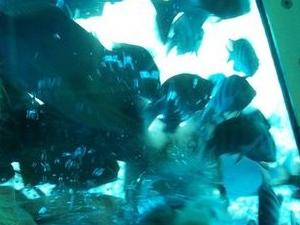 Grand Cayman Seaworld Observatory - Shipwreck and Fish Feeding Show Photos