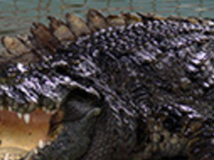 Half Day Crocodile Farm In Pattaya Photos