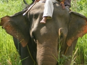 Half Day Elephant Riding Photos
