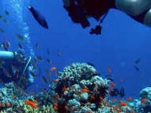 Half Day intro Diving in Hurghada Photos