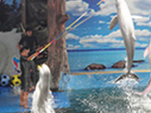 Half Day Pattaya Dolphin Show Photos