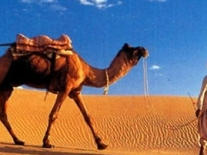Horse ride or camel ride in Sharm desert Photos