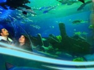 Istanbul Forum Magic Ice-Aquarium Photos