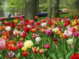 Keukenhof Gardens & Haarlem ***Best OFFER*** Photos