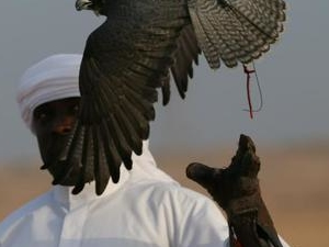 Khan hunting with FALCONRY and HAWK in Asia Photos