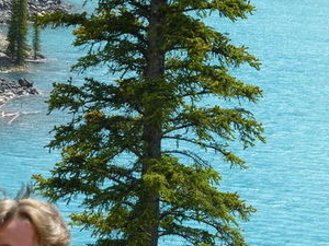 Lake Louise and Moraine Lake Tour Photos