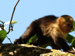 La selva biological station & Chocolate Tour Photos