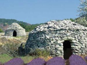 Lavender full-day tour Photos