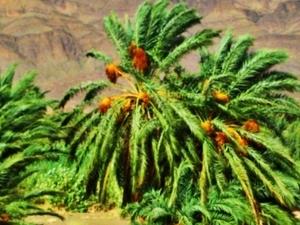 Moroccan Desert and Merzouga Dunes - Public Economical Tour Photos