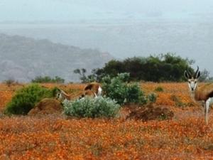 Namaqualand Flower Tour Photos