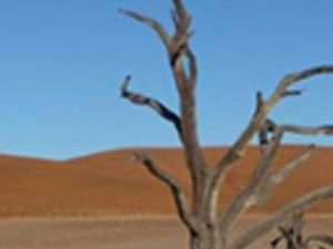 Namib desert tour (full day)