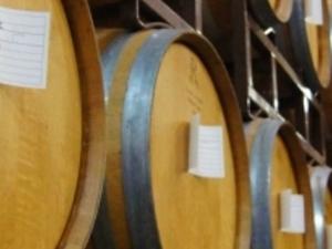 Napa & Sonoma Wine Country Tour Photos