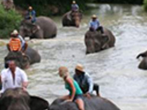 One Hour Elephant Trekking Photos