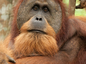 ORANGUTAN ADVENTURE IN NORTH SUMATRA Photos
