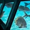 Panoramic Submarine in Sharm El Sheikh
