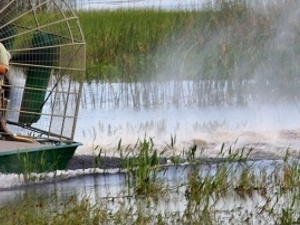 Private One Hour Airboat Tour Photos